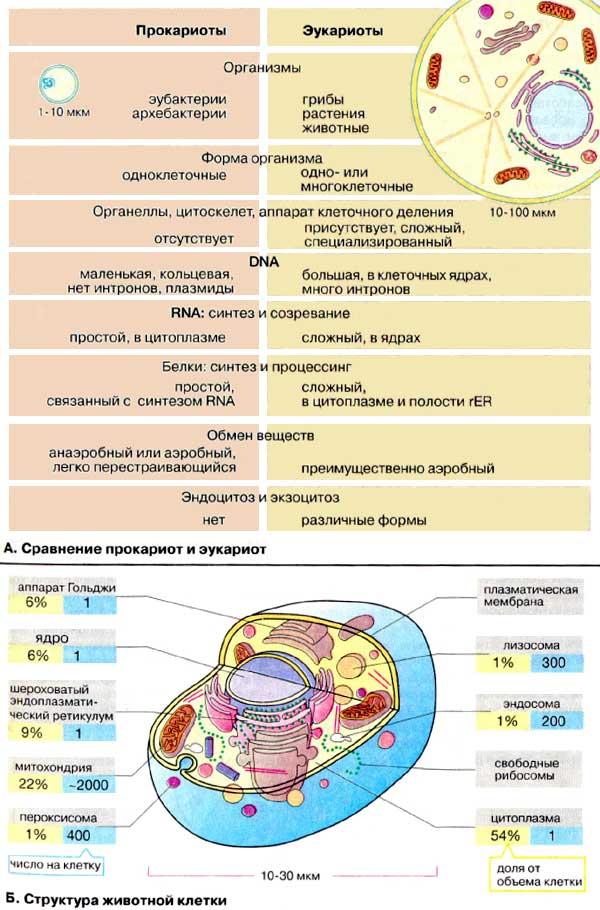 Структуры и функции