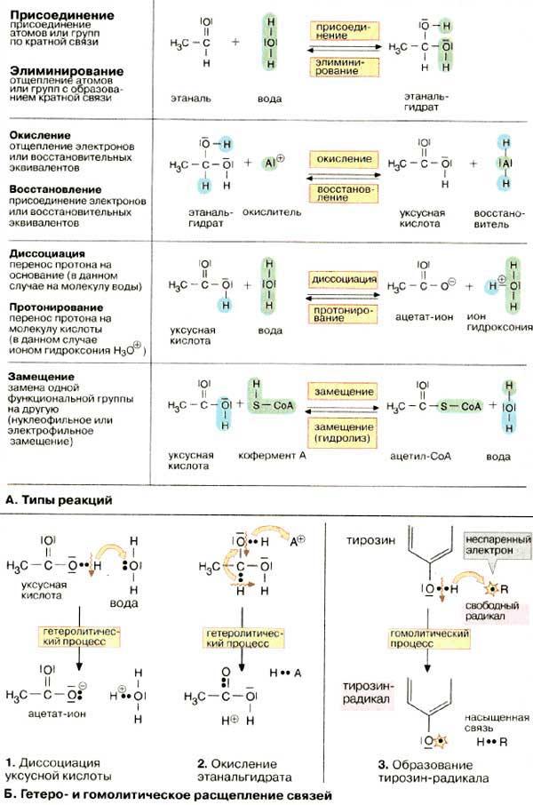 Химические реакции - ШКОЛА 617 УМНЫЕ ДЕТИ.