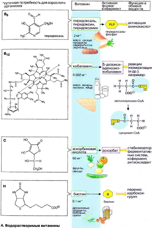 Водорастворимые витамины реферат по биохимии 4562