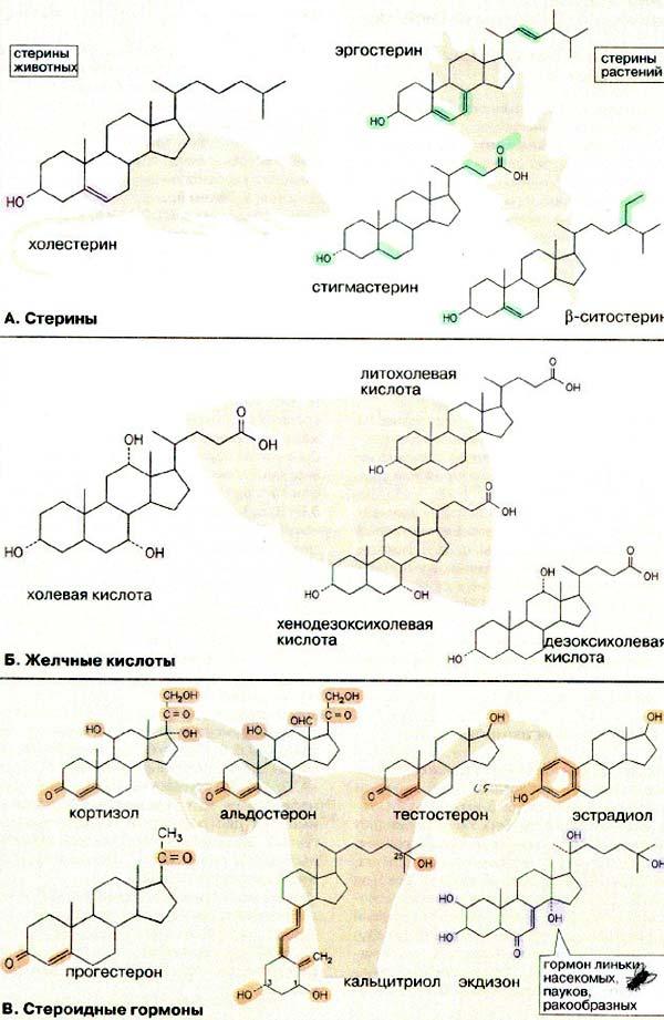 Классификация стероидов:
