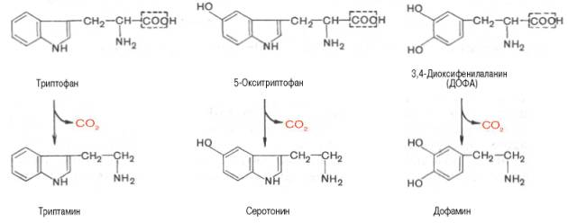 synthesising dmt from tryptophan