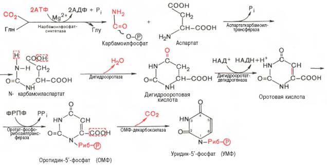 Последовательность химических