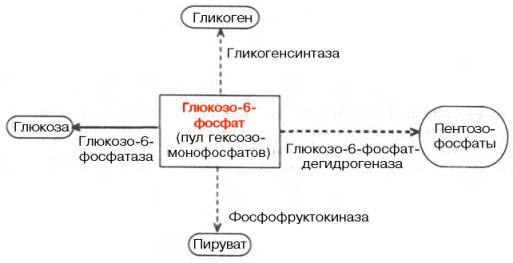 Участие глюкозо-6-фосфата в
