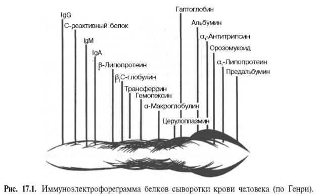 Иммуноэлектрофореграмма белков