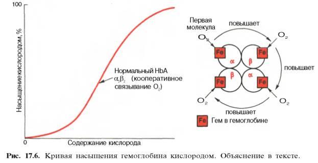 Насытить кровь кислородом в домашних условиях