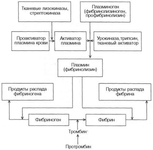 Рис. 17.9.  Схема фибринолиза.  В практической медицине в лечебных целях ферментные препараты и их ингибиторы широко...