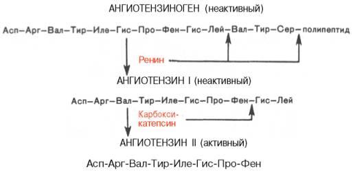 Химия пептиды это препараты анаболики для крс