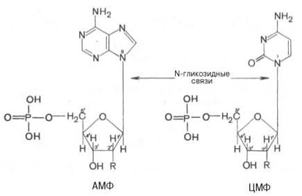 типа нуклеиновой кислоты