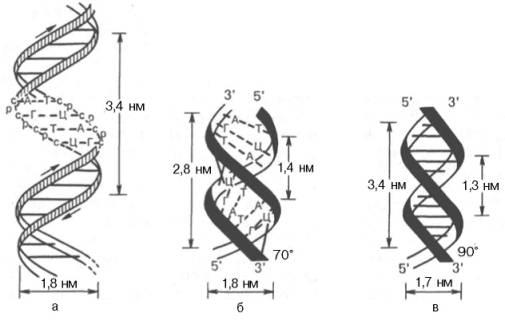 структуры и стабилизации