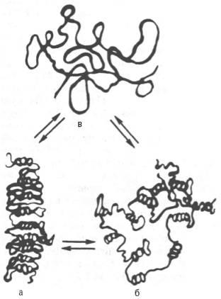 Третичная структура РНК в