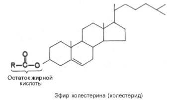 Холестерин стероиды выход из курса туринабола соло