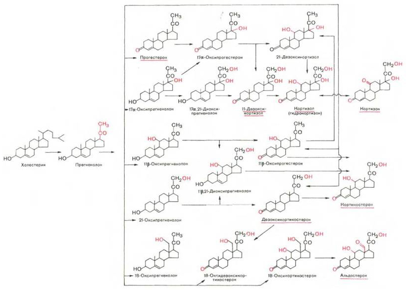 Кортикостероид фото