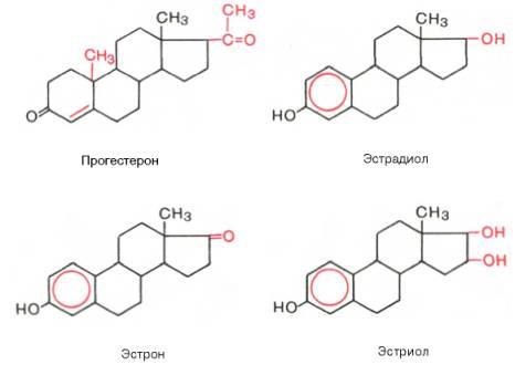 холестерин в организме человека укрепляет сосудистую стенку