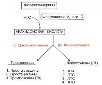 Простагландины сперма