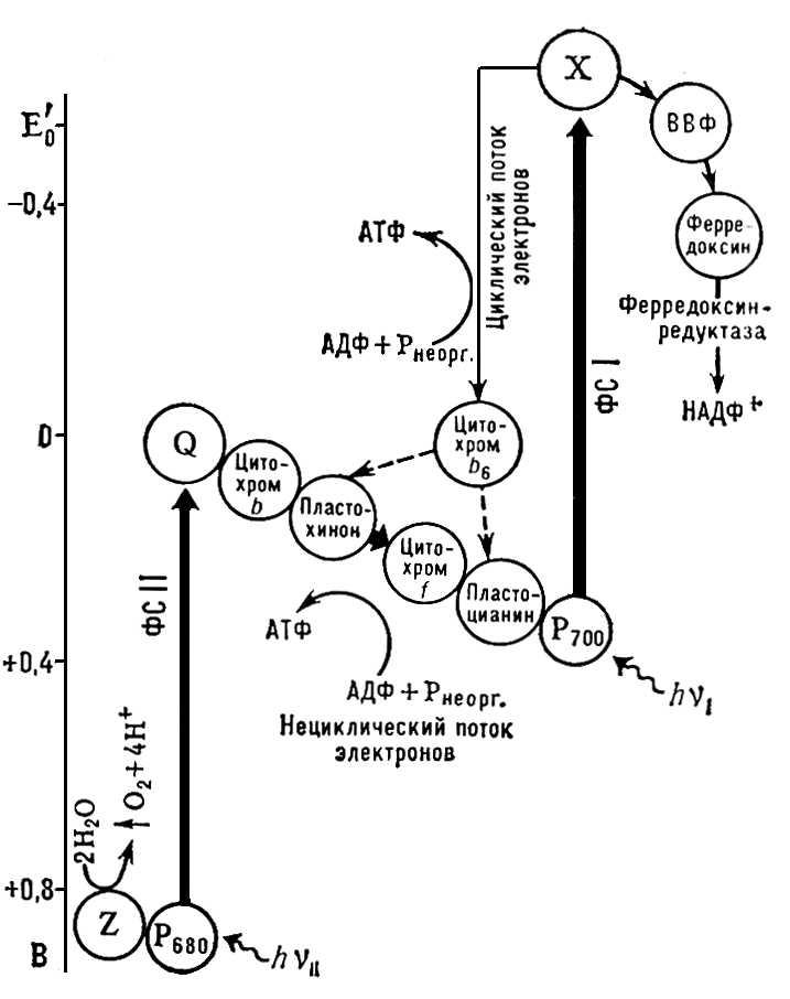 Схема фотохимических систем