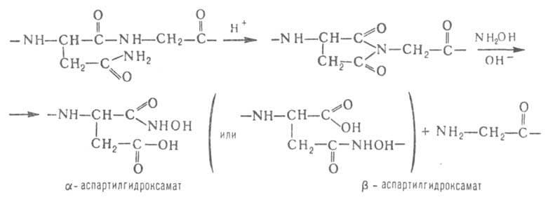 Схема гидролиза белка