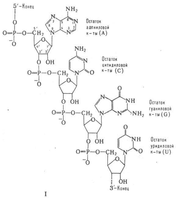 суммарной клеточной РНК.